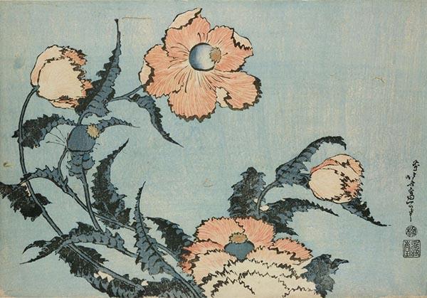 罂粟,葛饰北斋,木版画,1831-1832年