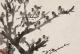"""国画山水对于""""树""""的基本绘画技法"""