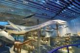 上海自然博物馆开启全网售票 刷身份证进入